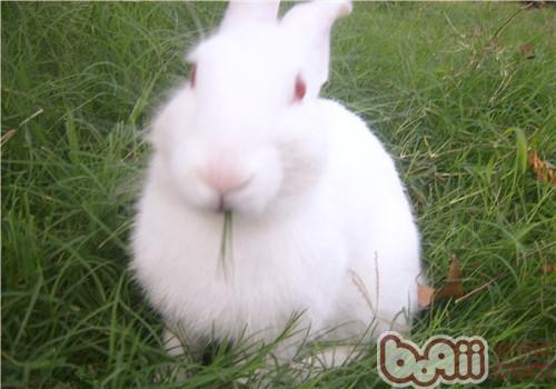 怎样为宠物兔制作简易饲料