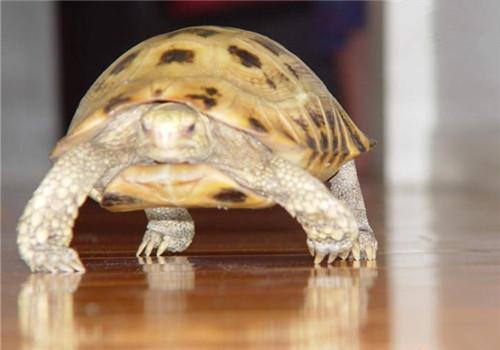 宠物龟原虫病的防治方法