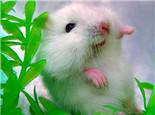 夏季谨防鼠粮变质