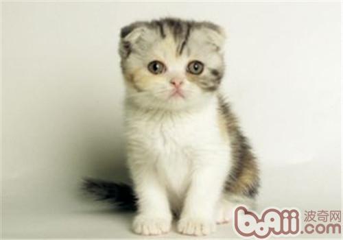 猫咪感冒怎么办?