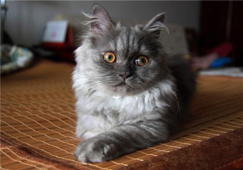 猫咪价格差距分析