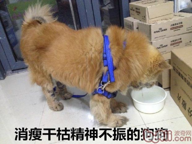 狗狗到医院做粪便检查的必要性图片