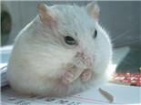 仓鼠库欣病的临床症状