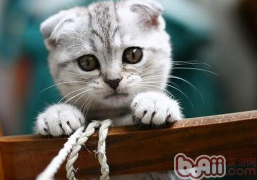 让猫咪自己选择猫砂