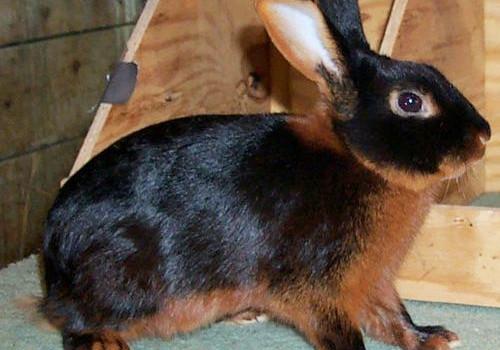 四月里为爱疯狂的兔子