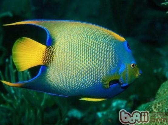 珊瑚礁鱼类疾病简介