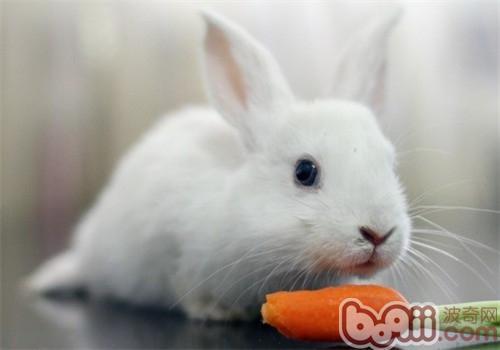 冬天要给兔子吃胡萝卜