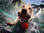 玩具对狗狗的重要性