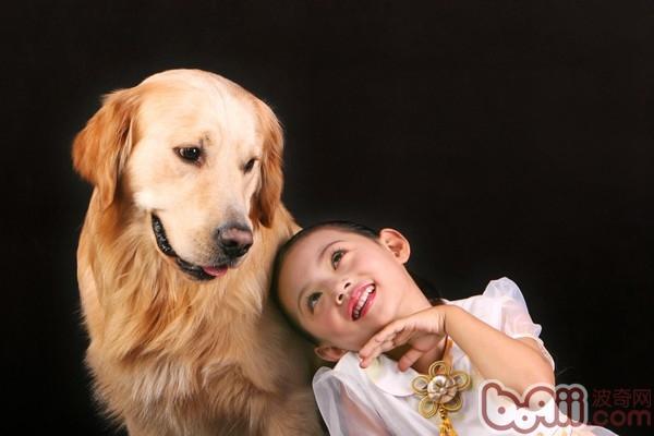 金毛犬(详情介绍)   很多人养狗都希望自己养的狗温顺听话,每个品种的狗狗性格都不同,如果主人想要狗狗能够和家中的小孩和平相处的,那么温顺一点的狗狗可以说是首选了。究竟哪些品种的狗狗属于比较温顺的呢?小编为你推荐以下三种狗狗,新手主人可以参考一下。   一、天使金毛犬   是十九世纪时期,苏格兰君主用黄色平毛腊犬、特威德西班牙水蜡犬和爱尔兰敦猎犬、拉不拉多犬和寻血猎犬交配孕育而成的金黄色长毛寻回犬,且此品种深受大家喜爱。属於温驯、活泼而且有力的狗狗;表情和善,喜欢玩也特别有耐心,且机警;神体结构很匀称,