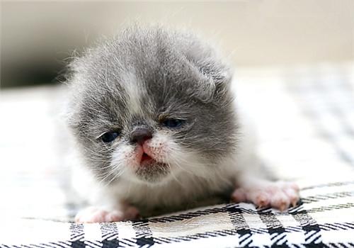 幼猫饲养-波奇网百科大全