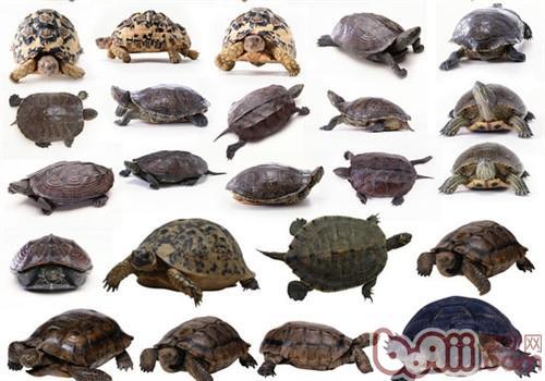 龟的分类基础知识