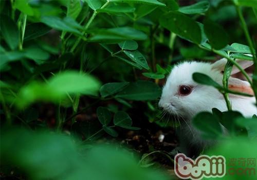 兔兔是非常可爱的动物
