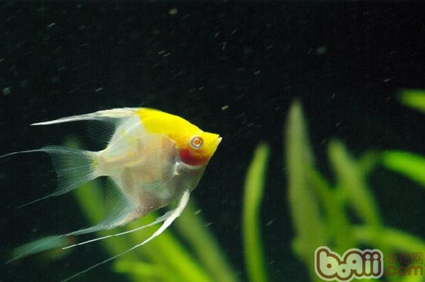 夏季养鱼该如何调节水质