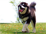 如何打造狗狗的健康心理