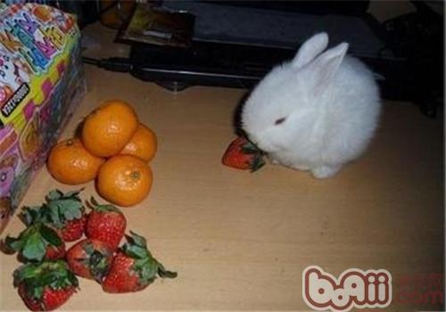 兔兔吃水果要有所选择