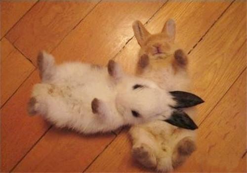 如何教兔兔认识新朋友
