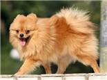 狗狗摇尾巴的频率代表兴奋程度