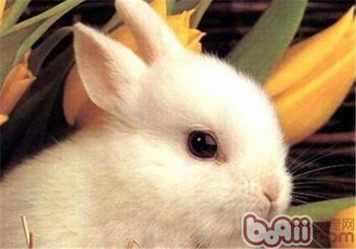 宠物兔一天饲喂几次比较合适?-轻博客