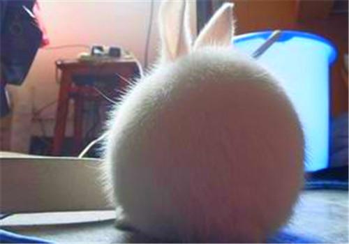 养兔成功者应有三个习惯