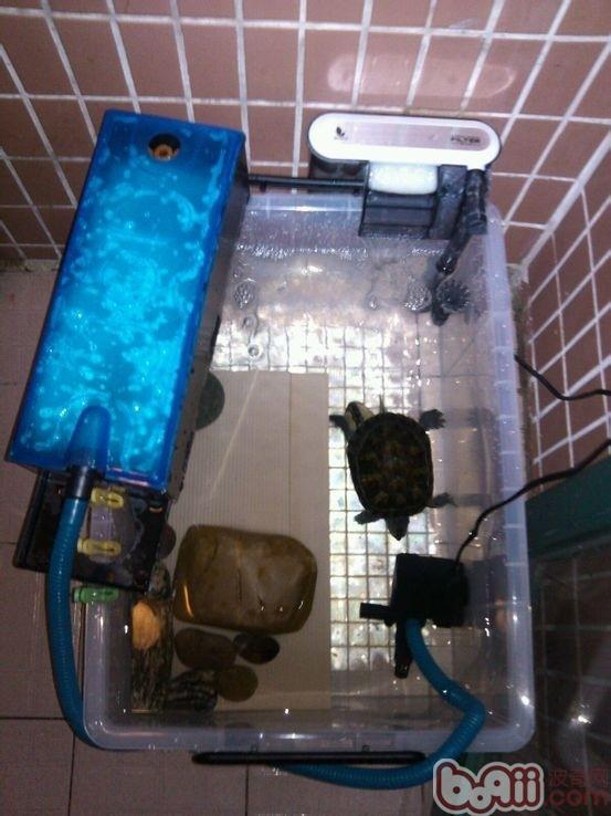 整理箱设计龟缸