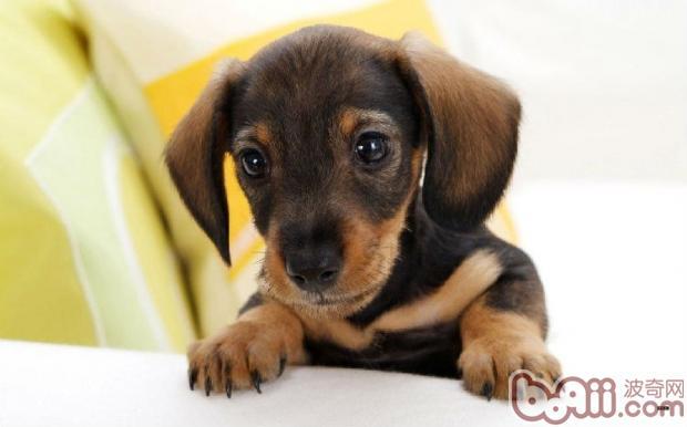 狗狗低血糖的常见症状-轻博客