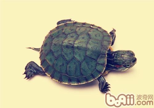 动物 龟 500_350