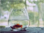 温度波动对鱼病的影响
