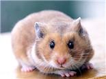 哪些食物对仓鼠健康有益