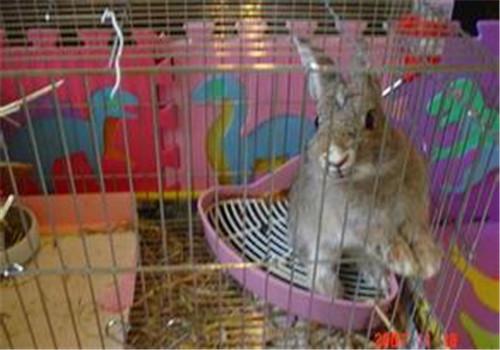 如何为宠物兔选择合适的厕所