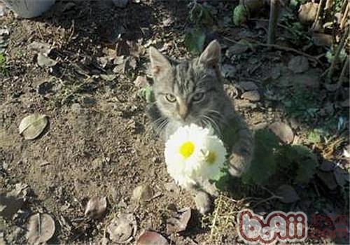春天对猫猫进行管理的方法