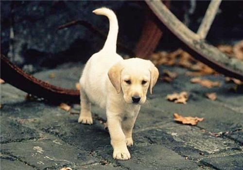 如何给流浪狗做一个全面的体检