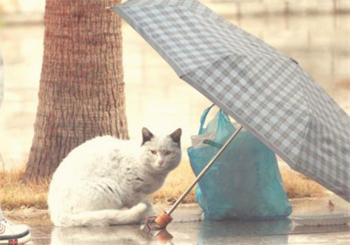 临时寄养流浪猫要注意什么