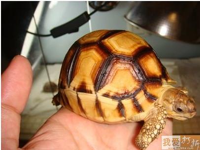 给陆龟驱虫的常见误区