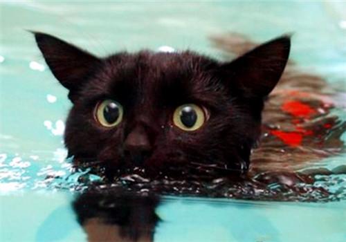 猫很怕洗澡、下雨和水的原因