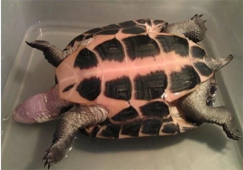 龟红脖子怎么治疗?