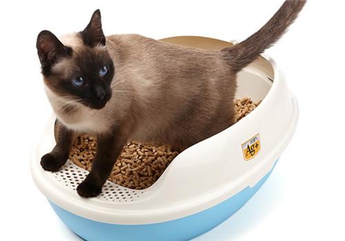 猫用砂子掩盖排泄物是为了保护自己