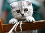 猫咪耳朵发热的原因是什么