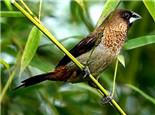 自制鸟饲料需要注意营养均衡