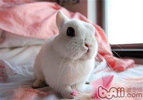兔子产崽箱结构图片