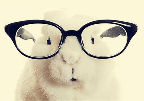如何帮助特殊的兔子上厕所