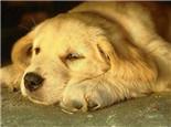 与初次见面的狗狗培养感情