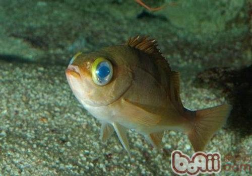 关于鱼病防治药的一些知识