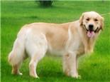 【测试】狗狗智商小测试