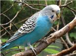 鸟儿日光浴有助于杀菌