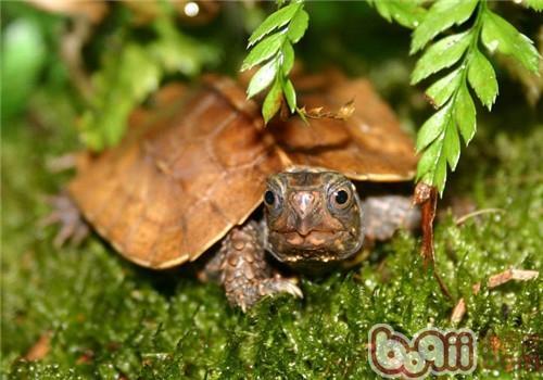 龟龟溺水时如何抢救