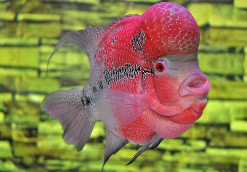 浅析鱼的虫类疾病