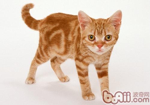 猫咪几种中毒的解救措施
