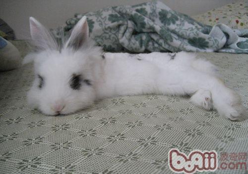 如何根据宠物兔的年龄更换牧草|兔子养护-波奇网