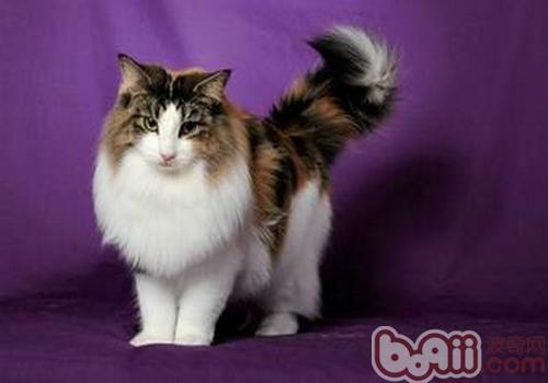 关于猫咪传染性腹膜炎