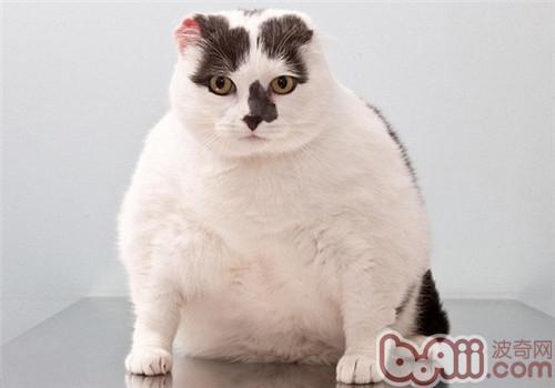 必威体育appios肥胖会出现哪些危害